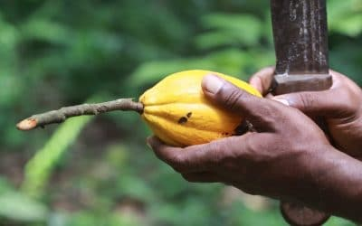 Improving health for cocoa growers and their families
